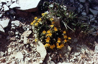 Eb fiori muri